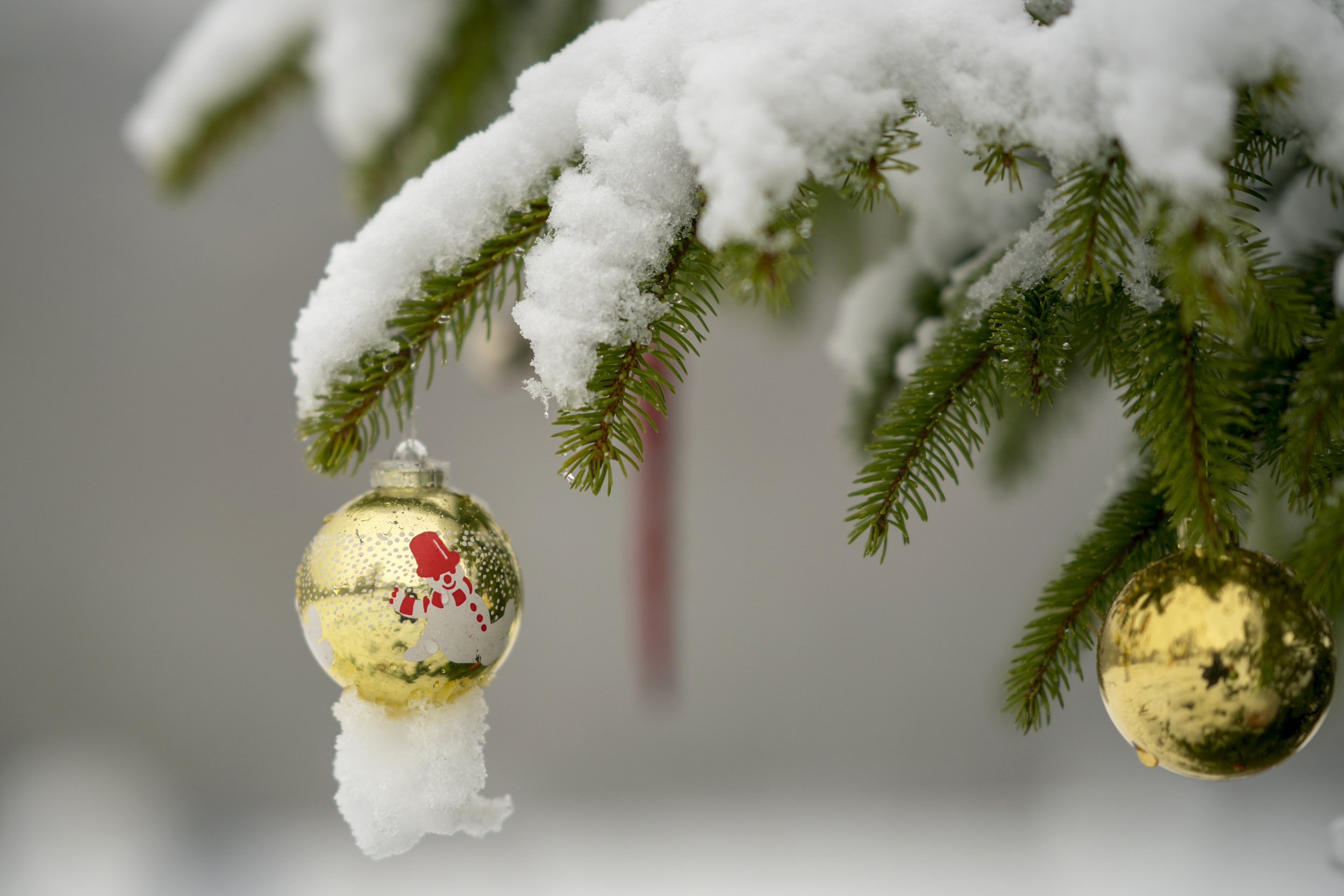 tree with ornament