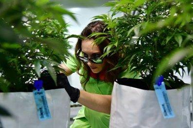 which, states, legalization, marijuana, 2019