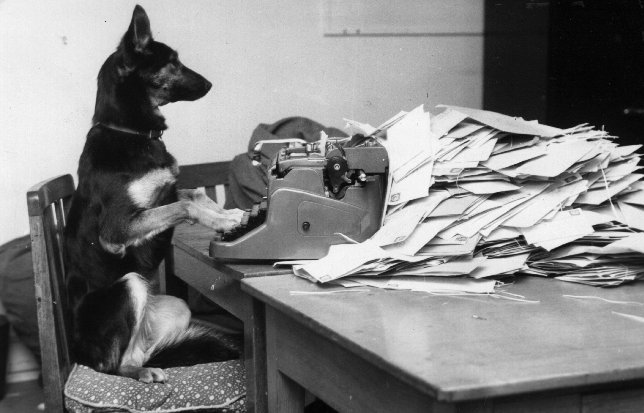 Dog at typewriter