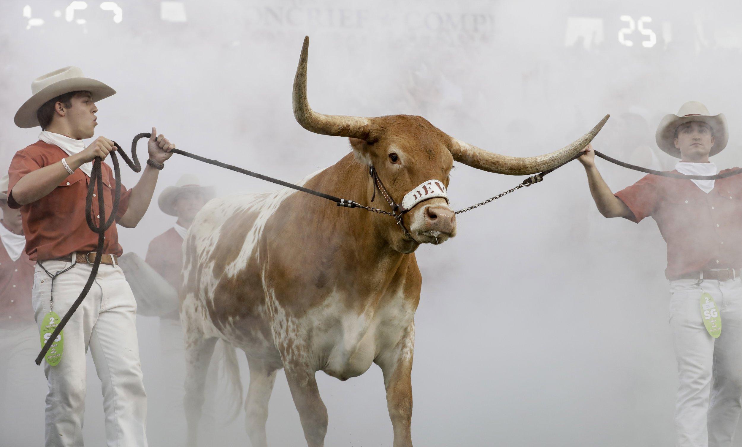 35be039acc0 Video  Texas Mascot