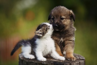 kitten puppy cute aggression getty stock