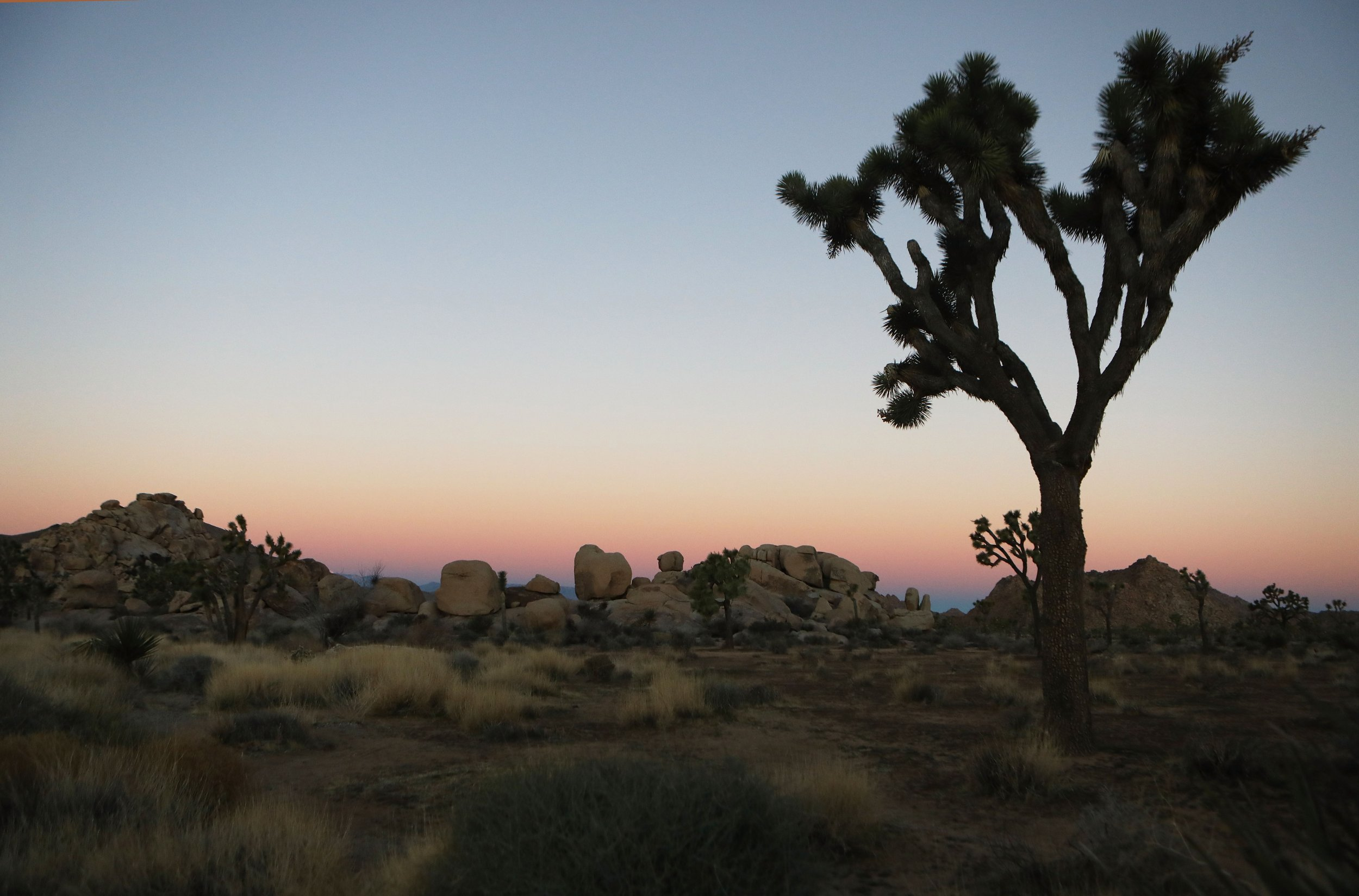 GettyImages-Joshua-Tree
