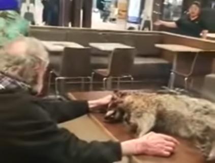Raccoon in McDonald's