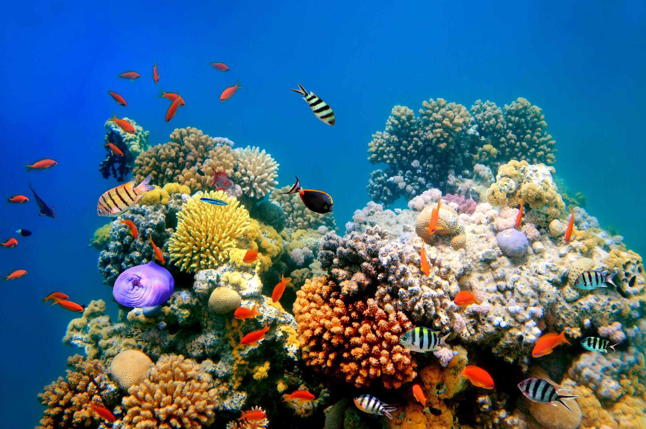 ocean fish tropical stock getty