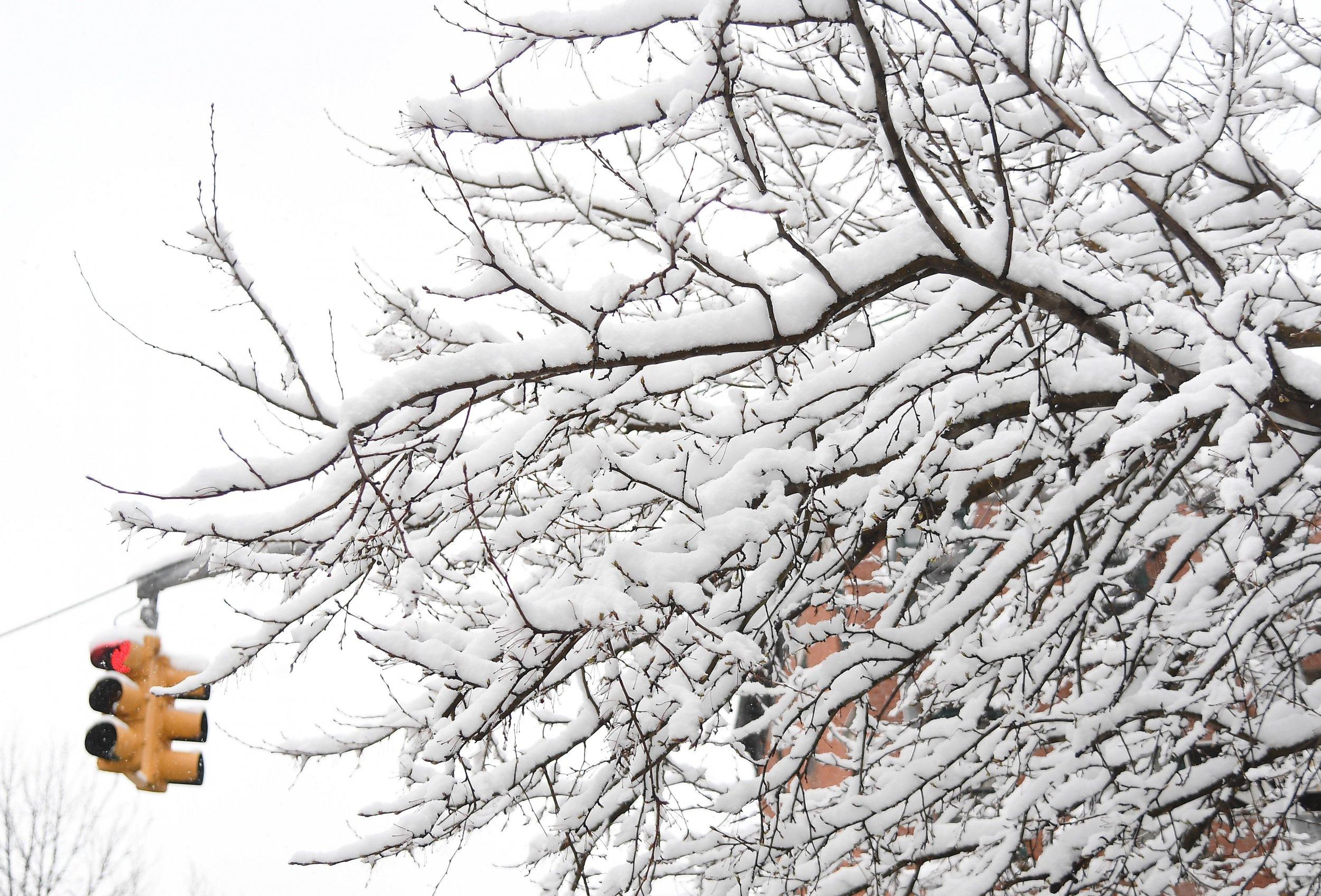 snowy tree storm