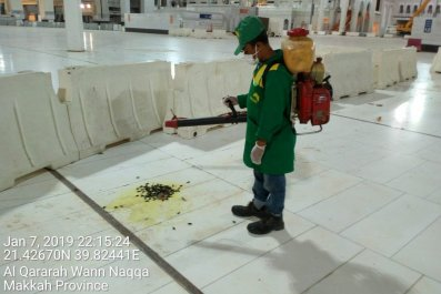 LocustSwarmSaudiArabiaMecca