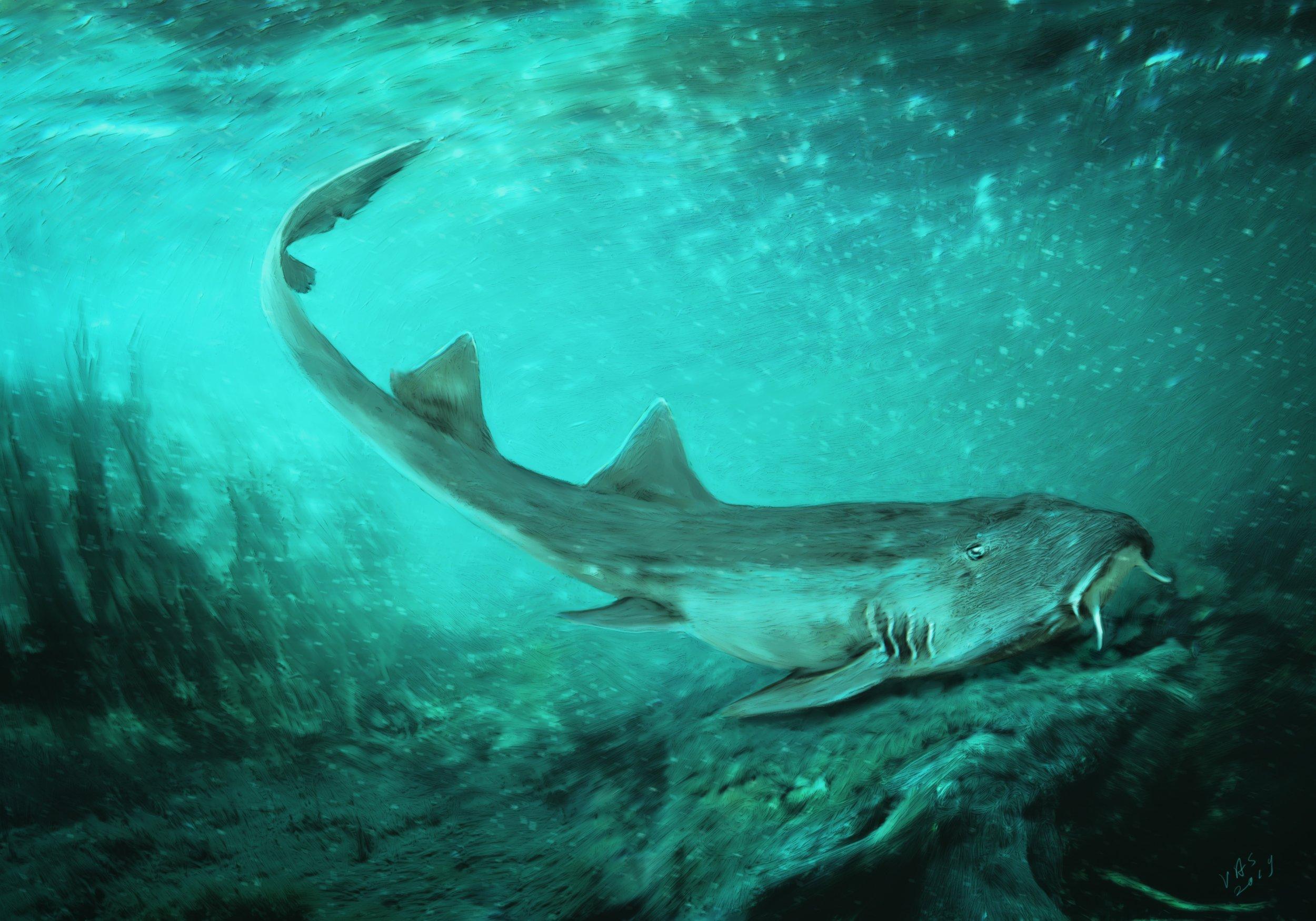 carpet shark