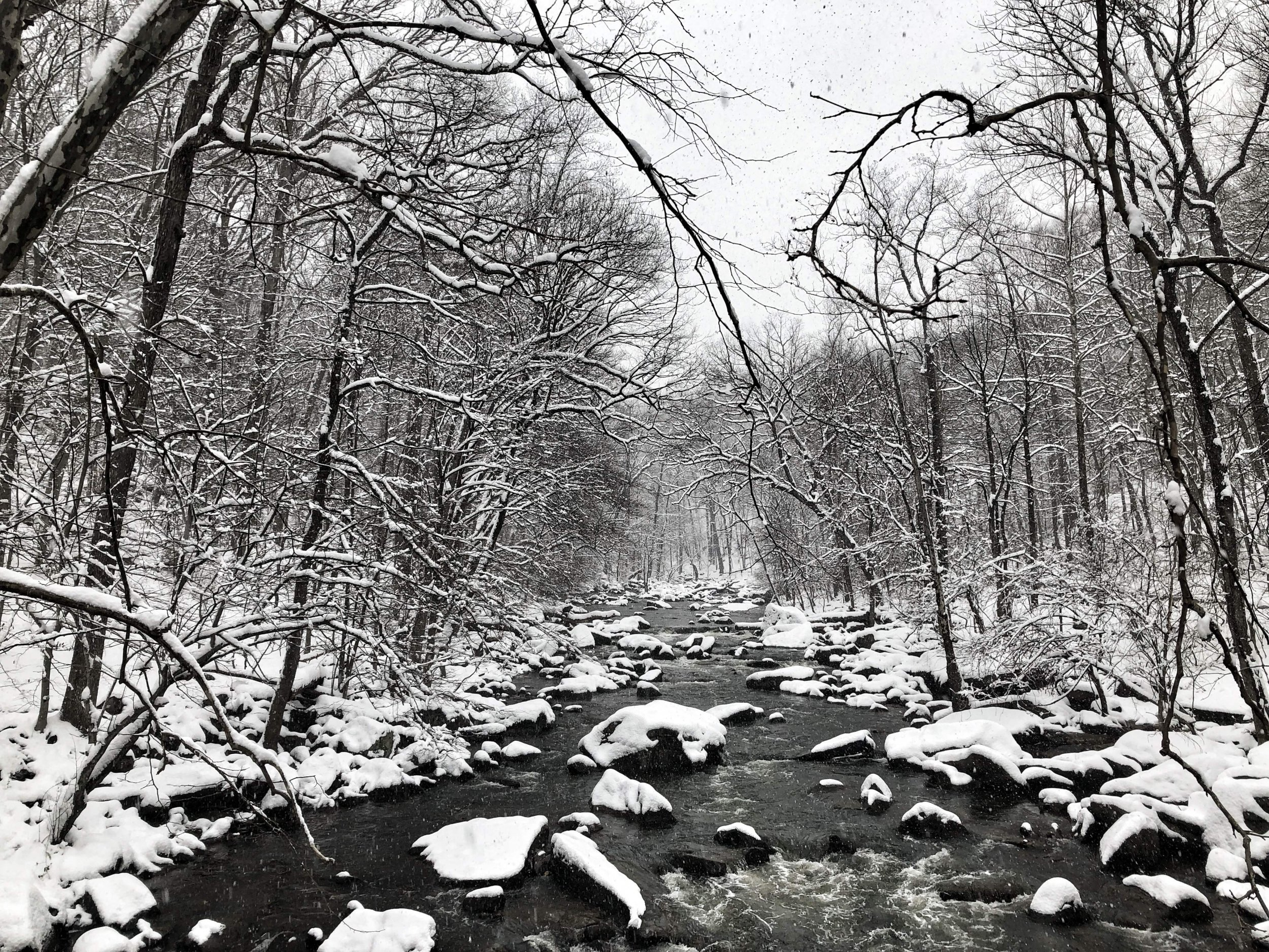 snow on trees and creek
