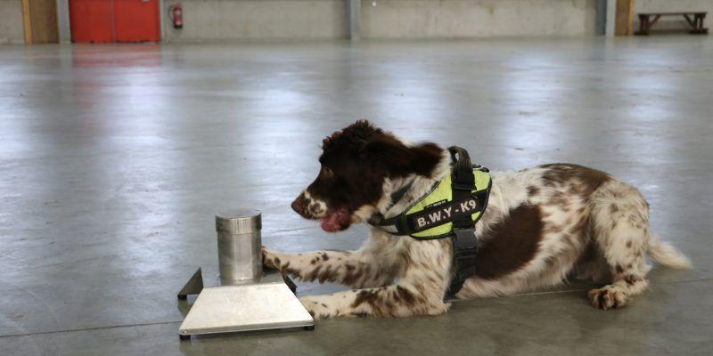 Sniffer Dog, Police Dog, Tobacco, Smuggling, Drugs, Guns