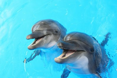 dolphin stock