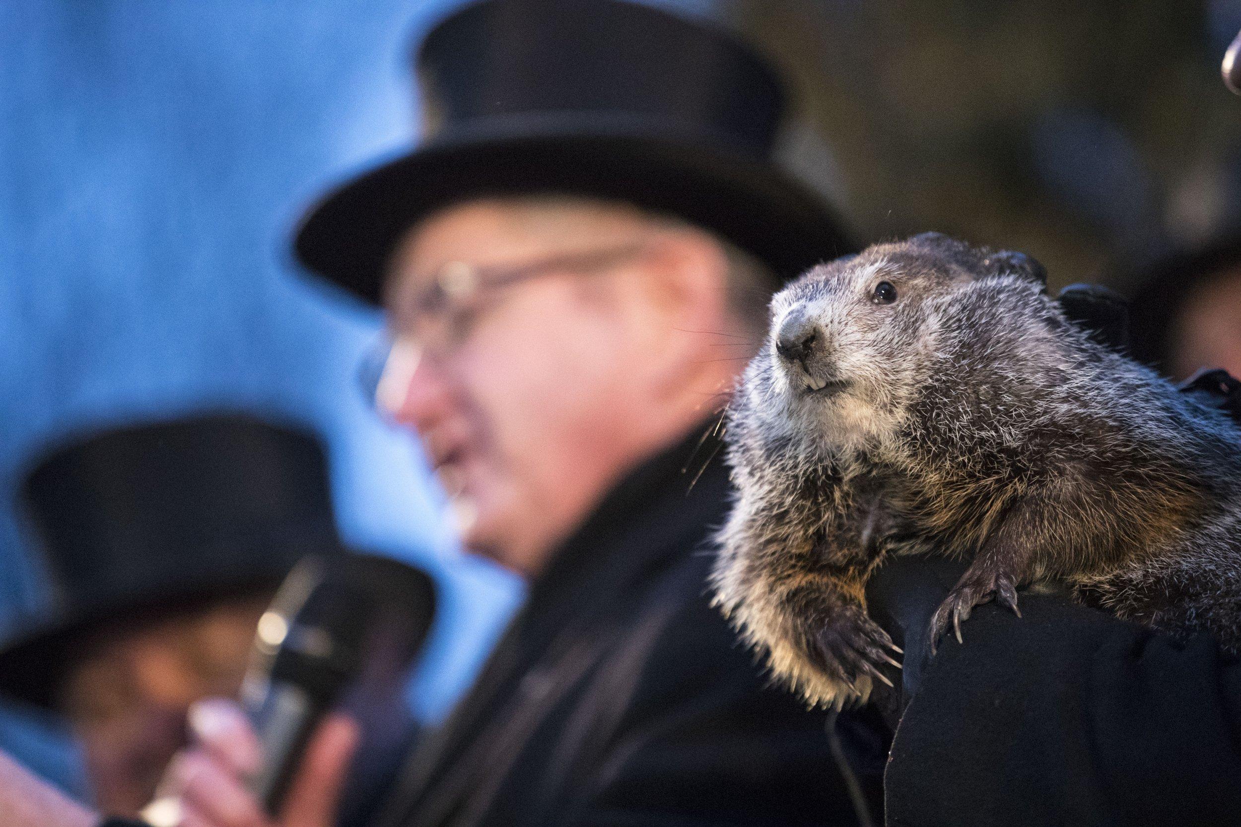 Groundhog Day, Groundhog, Punxsutawney, Punxsutawney Phil, Winter, Spring, Shadow