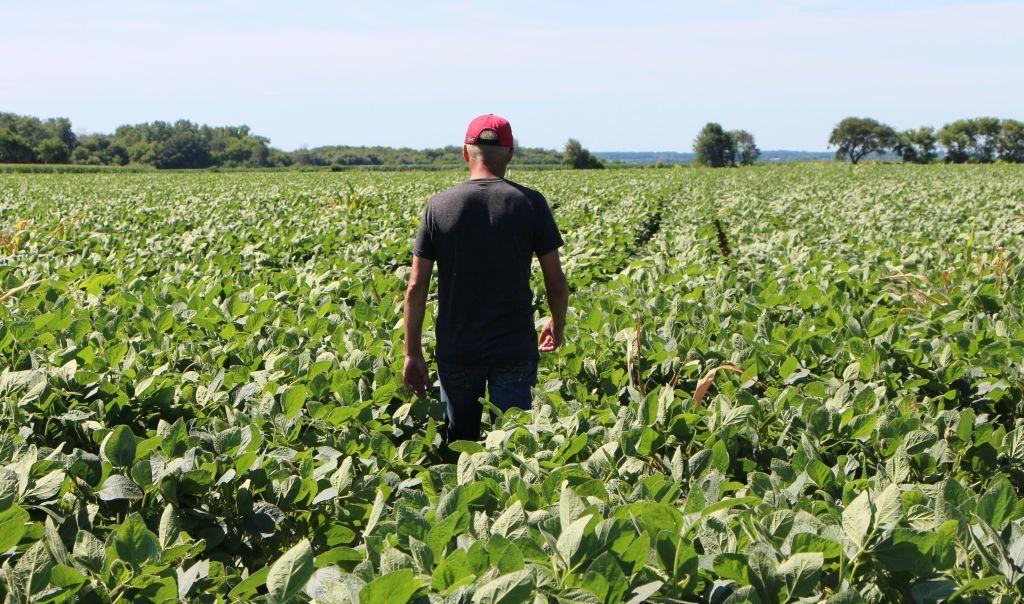 American, soybean, farmers, Trump, trade, war, China