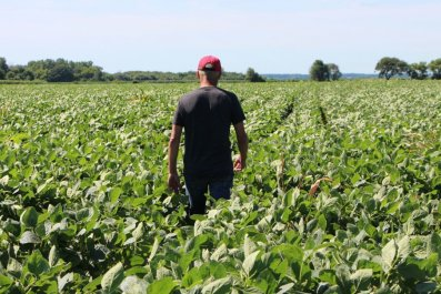 American, soybean, farmers, Trump, trade, war, China