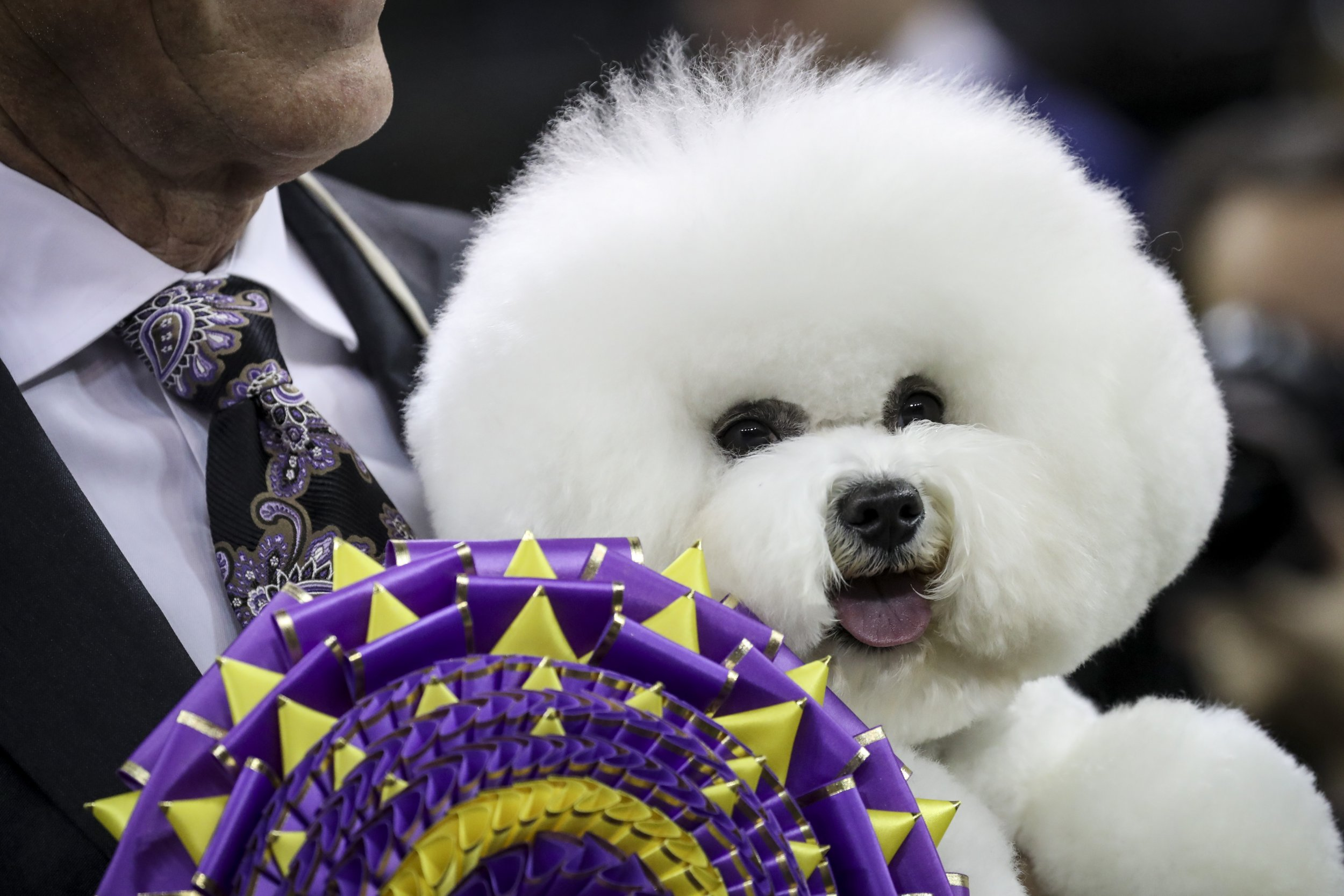 Watch Westminster Dog Show 2020.Westminster Dog Show 2019 Time Channel How To Live Stream
