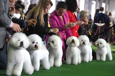 01 Westminster Kennel Club dog show