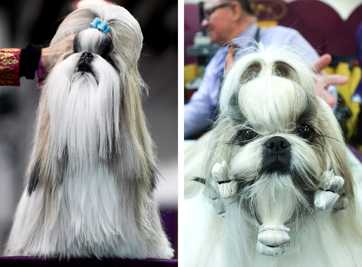 03 Westminster Kennel Club dog show