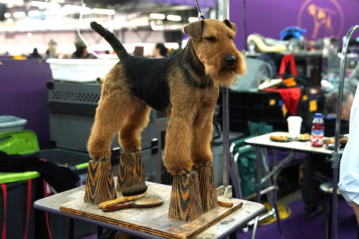 04 Westminster Kennel Club dog show