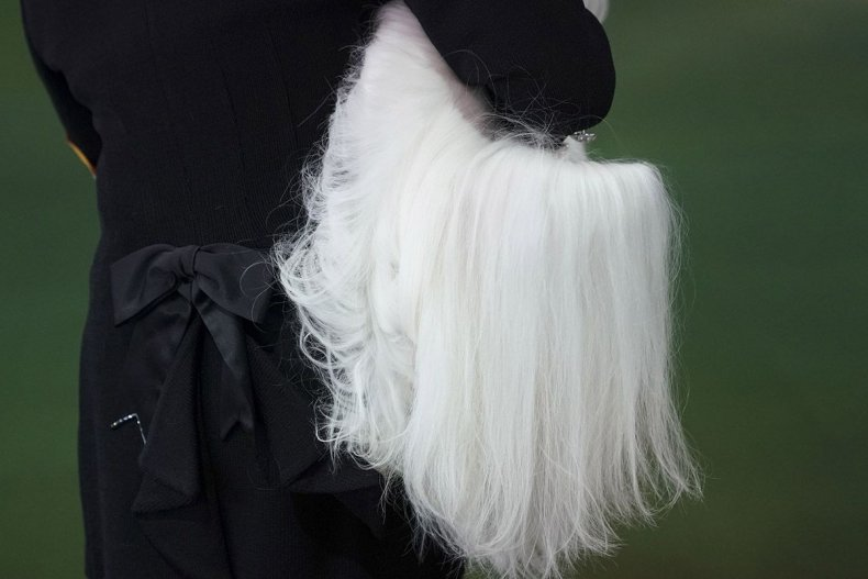 10 Westminster Kennel Club dog show
