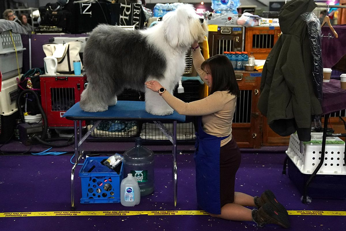 12 Westminster Kennel Club dog show