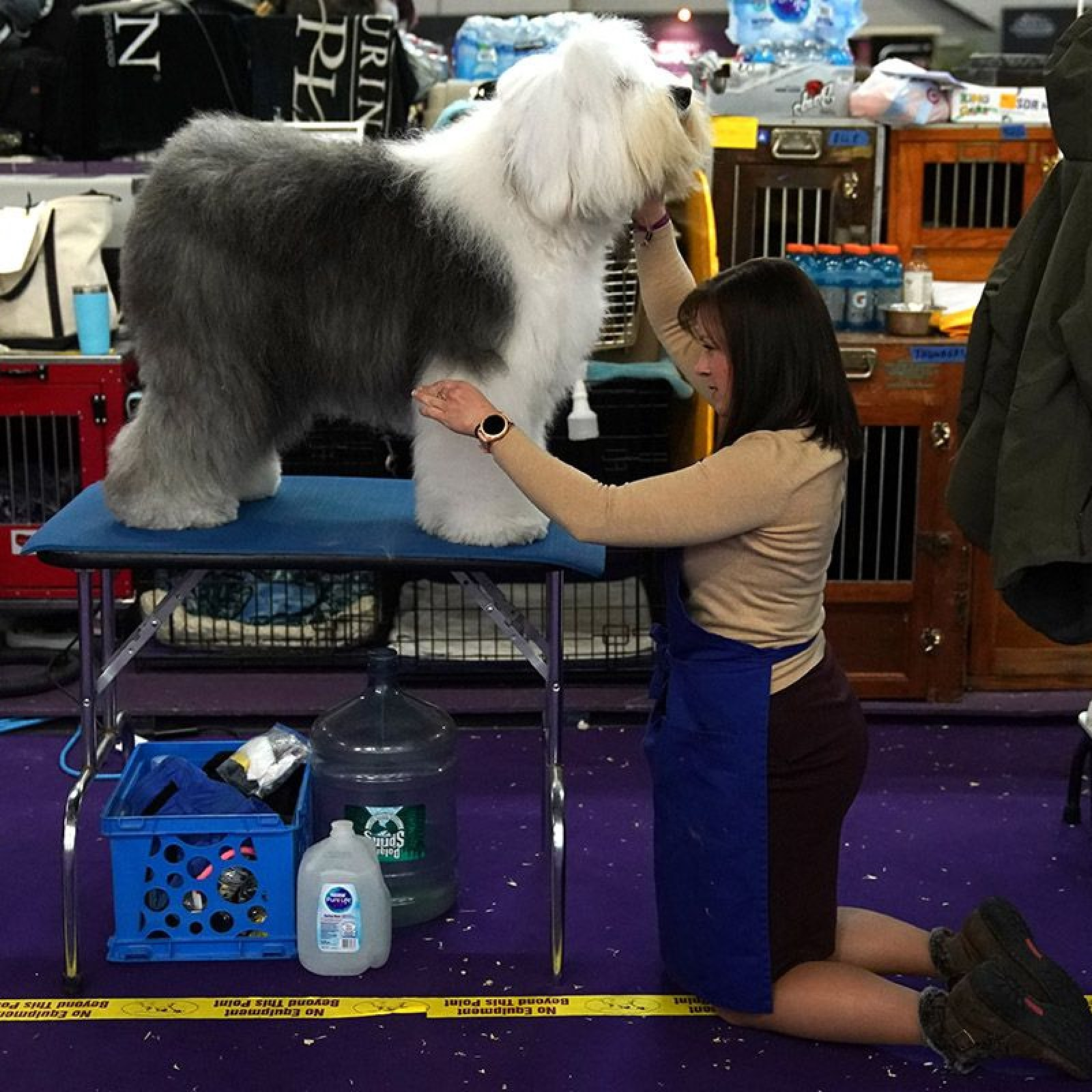 Best in Show? Westminster Kennel Club Dog Show 2019 in Pictures