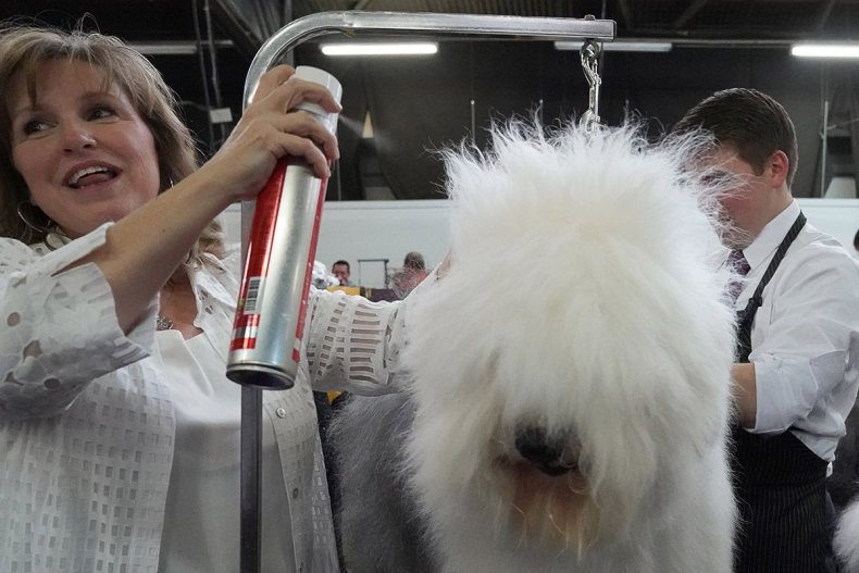 13 Westminster Kennel Club dog show
