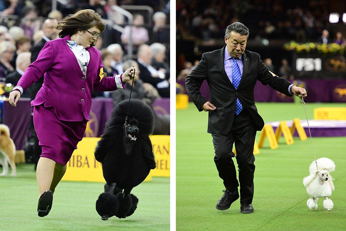 15 Westminster Kennel Club dog show