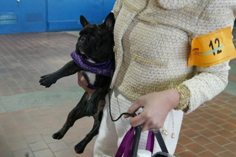 16 Westminster Kennel Club dog show