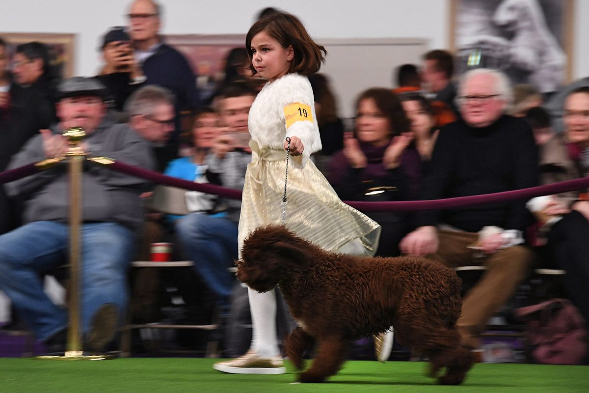 18 Westminster Kennel Club dog show