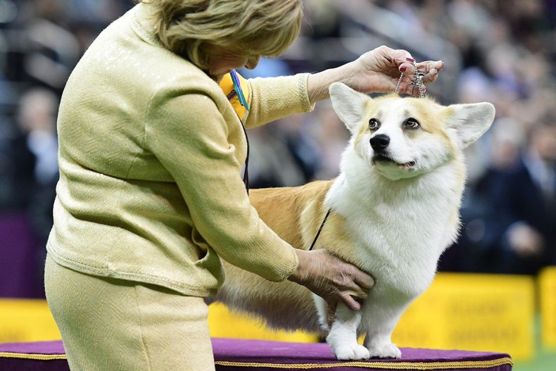 19 Westminster Kennel Club dog show