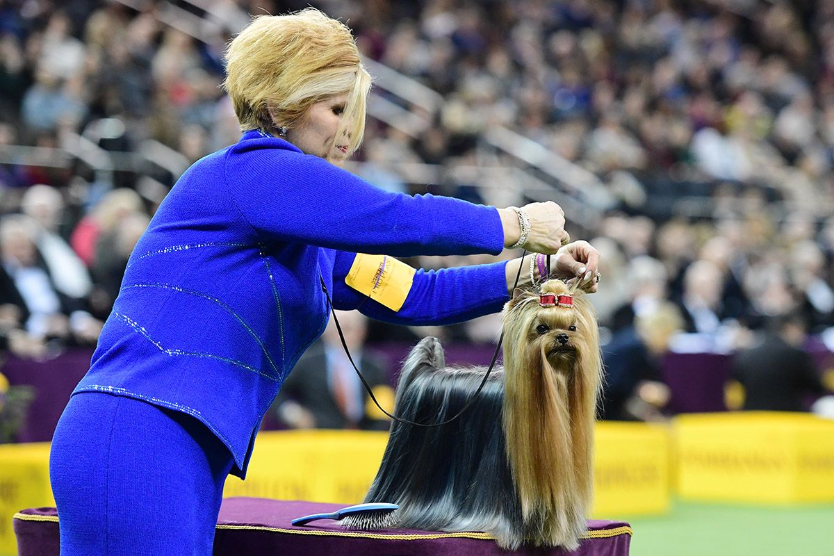 20 Westminster Kennel Club dog show