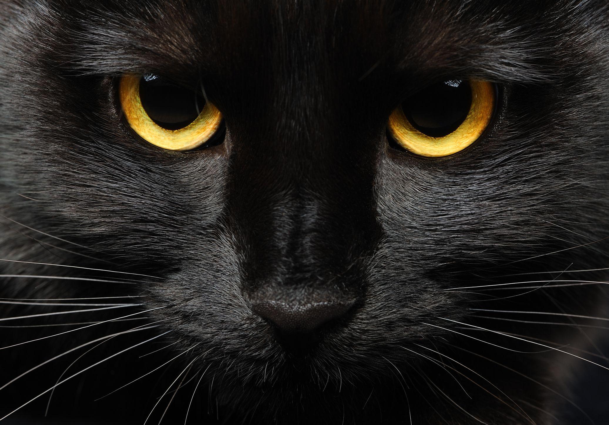 black cat stock getty