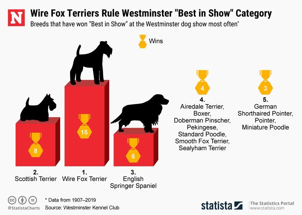20190213_Westminster_Dog_Show (1)