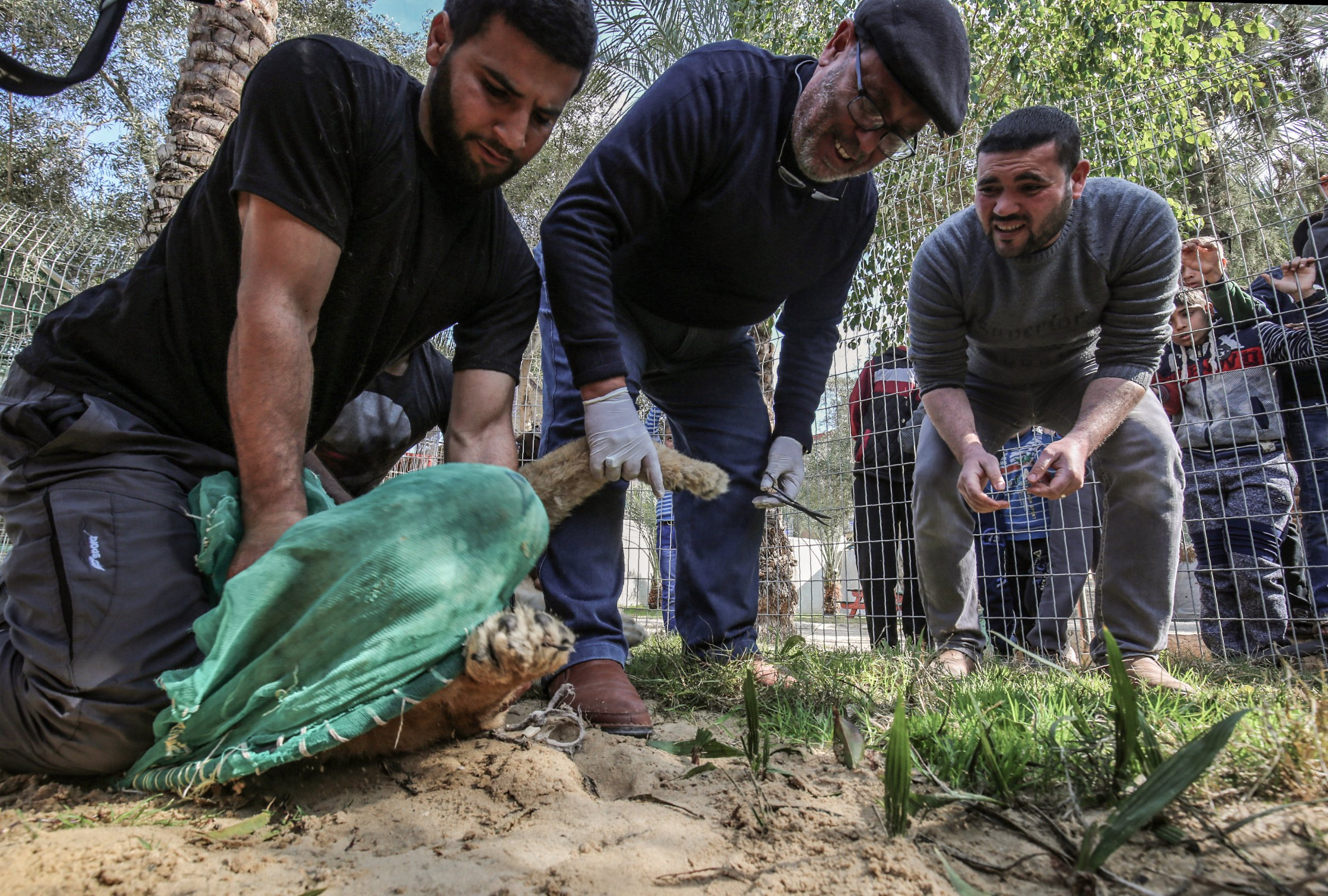 rafah zoo in gaza cut lion's claws so she could play with child visitors
