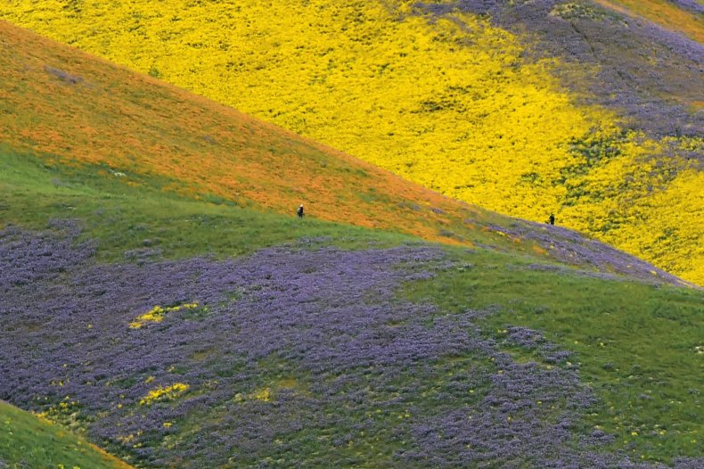 super bloom california