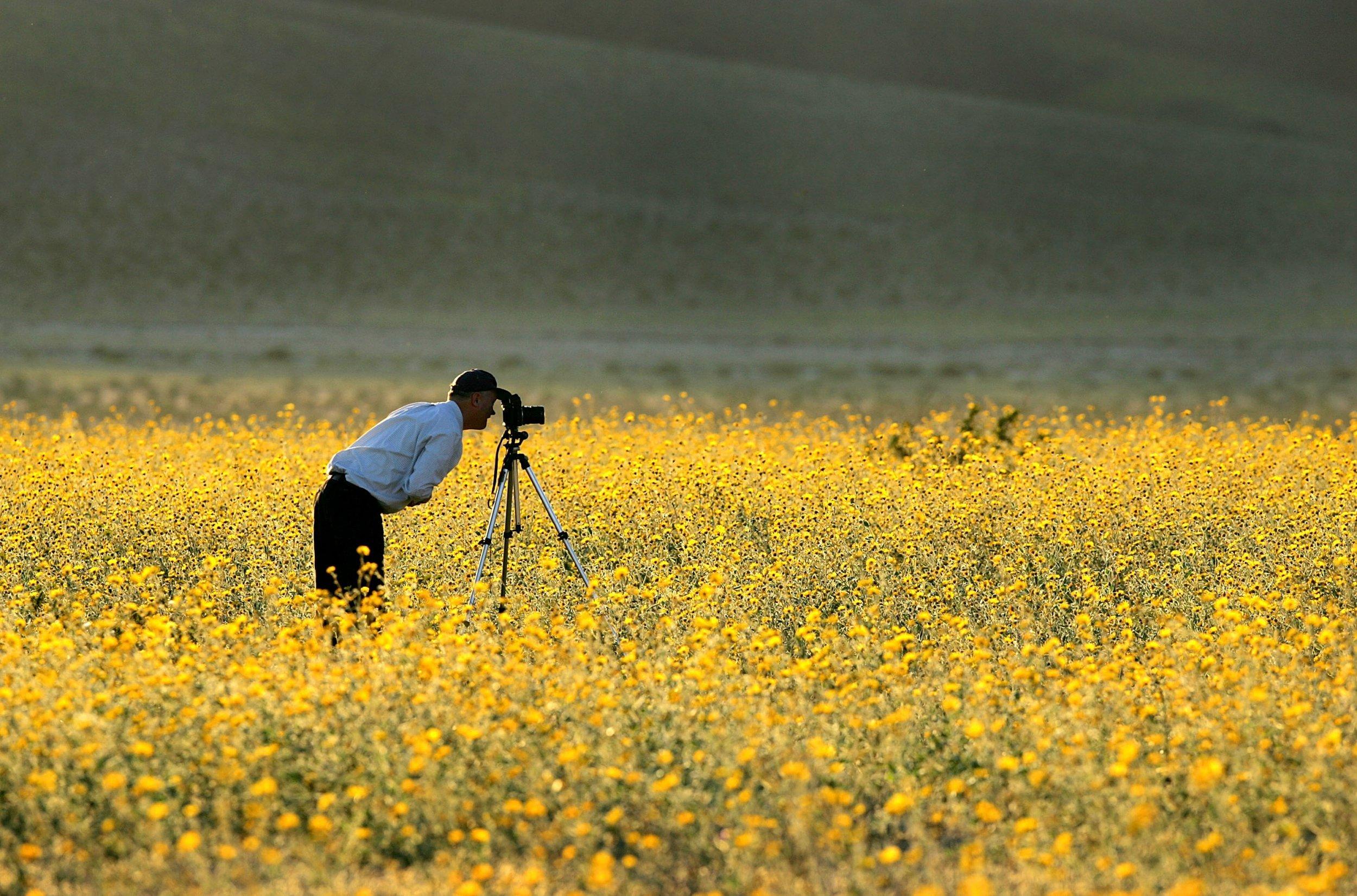 wild flower death valley california getty