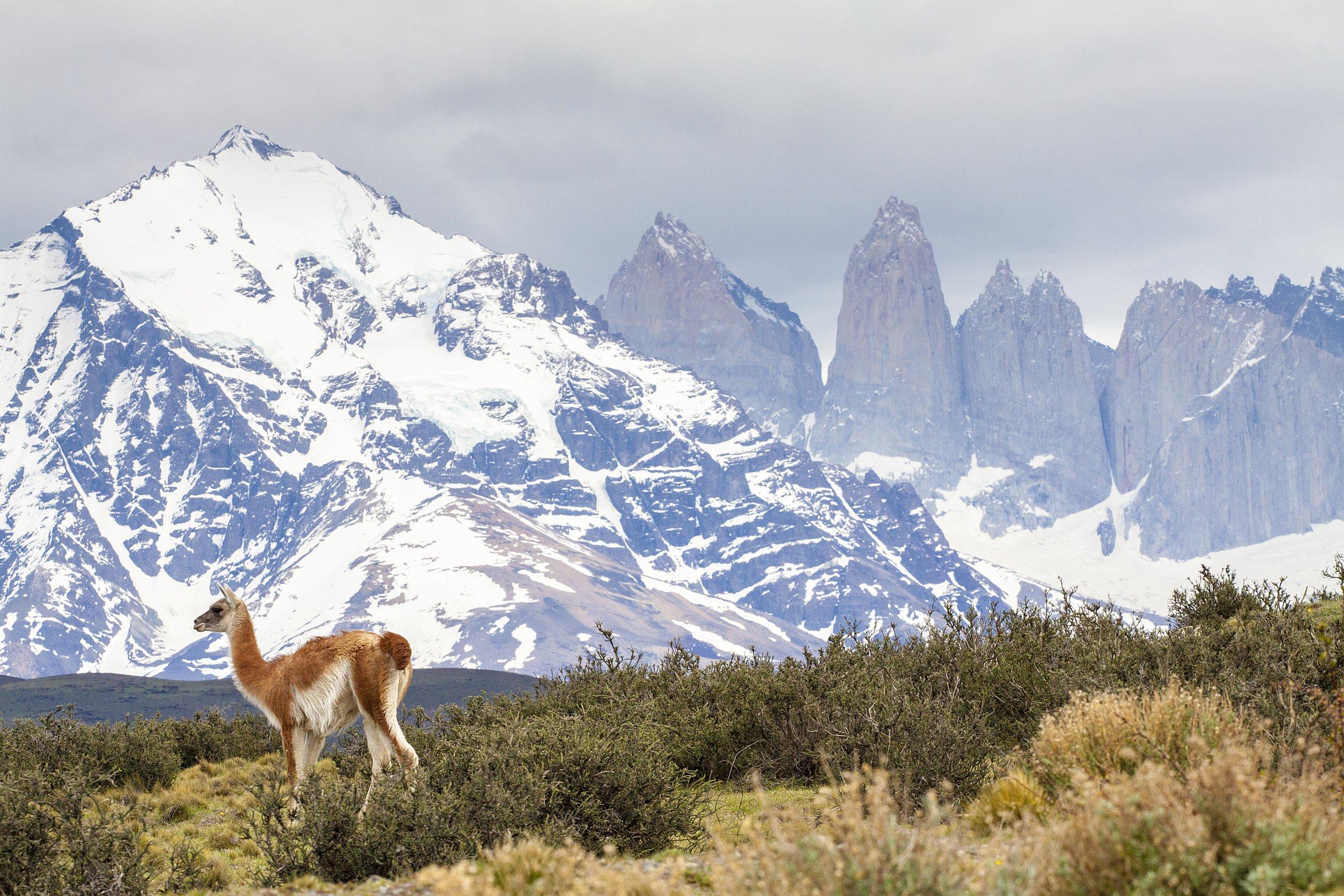 Torres del Paine National Park Stocksy_comp_410307 (1)