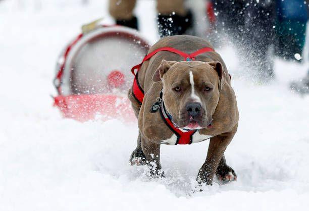 Montana Dog Keg Race