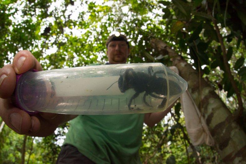 world's biggest bee