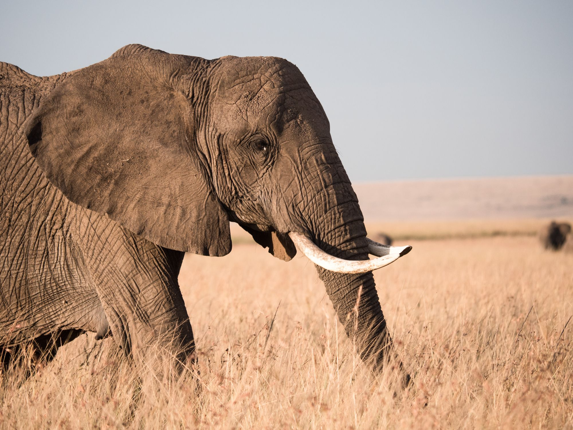 File photo: African Elephant portrait
