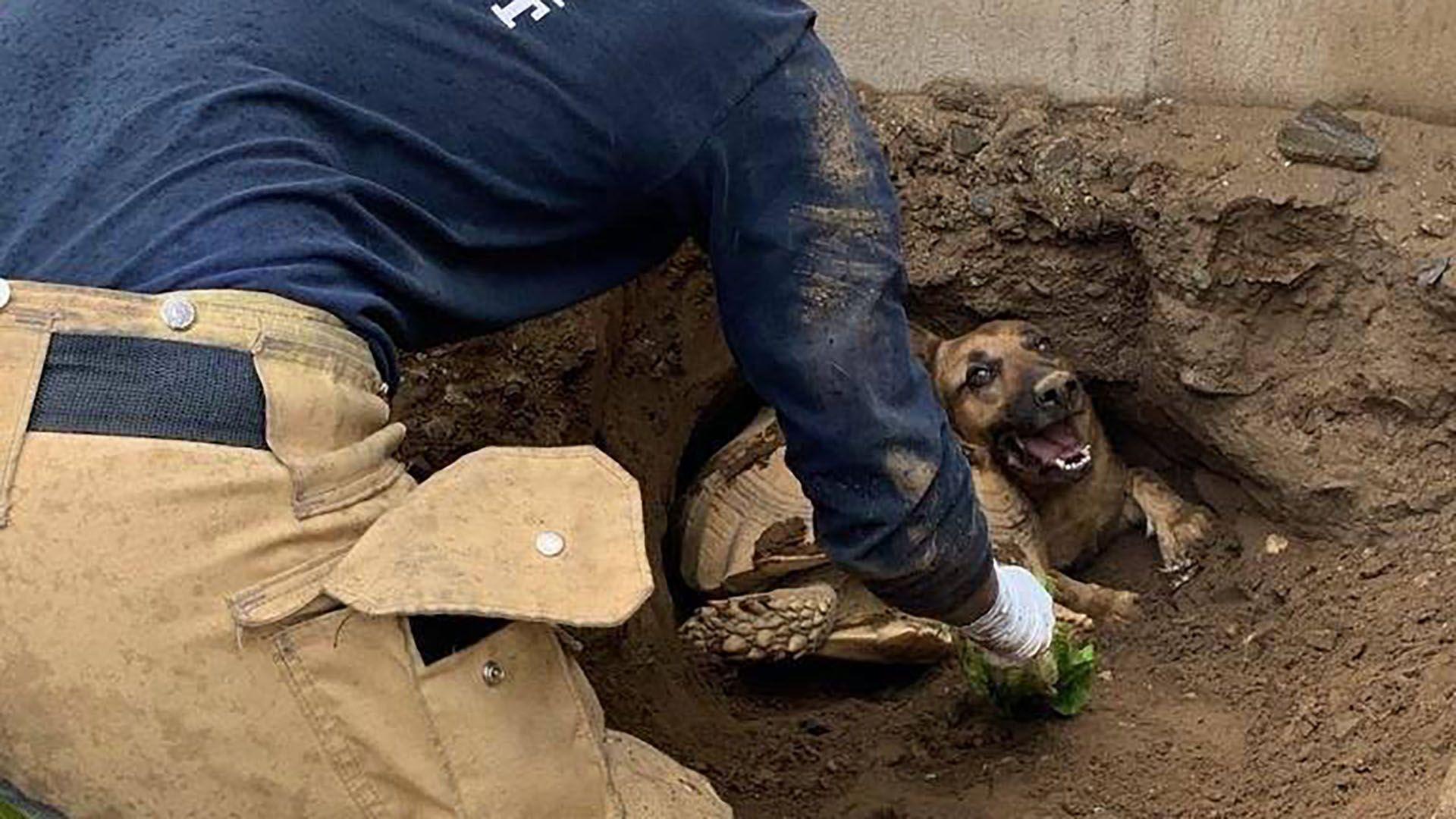 dog saved