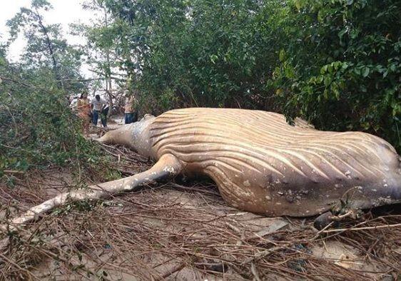 whale rainforest