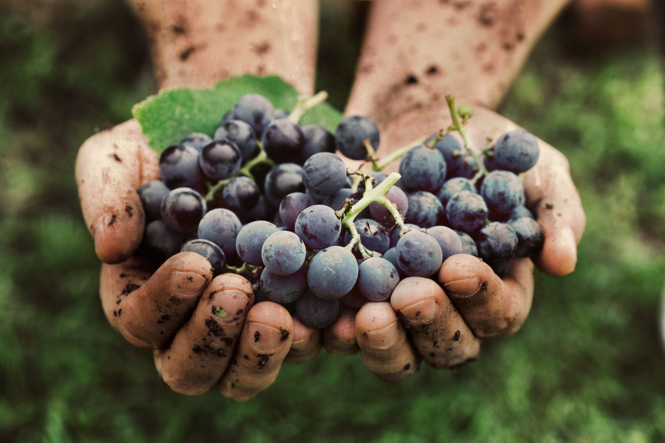 Natural vs Organic Wine 2