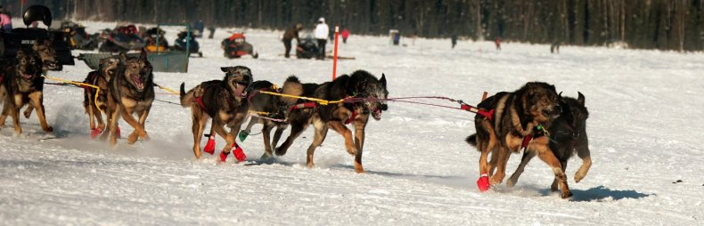 iditarod race alaska nome anchorage mitch seavey