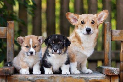 Puppy, Short Ribs, Death