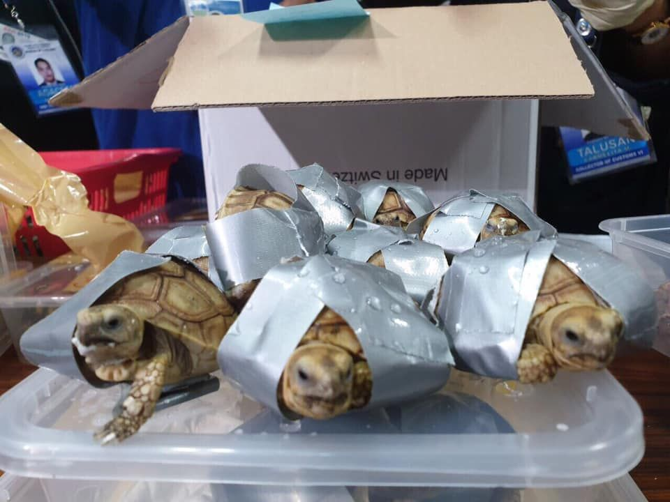 Turtles Manila