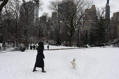New York City, Central Park, snowstorm