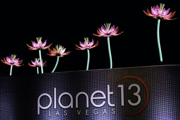 planet 13 cannabis dispensary marijuana