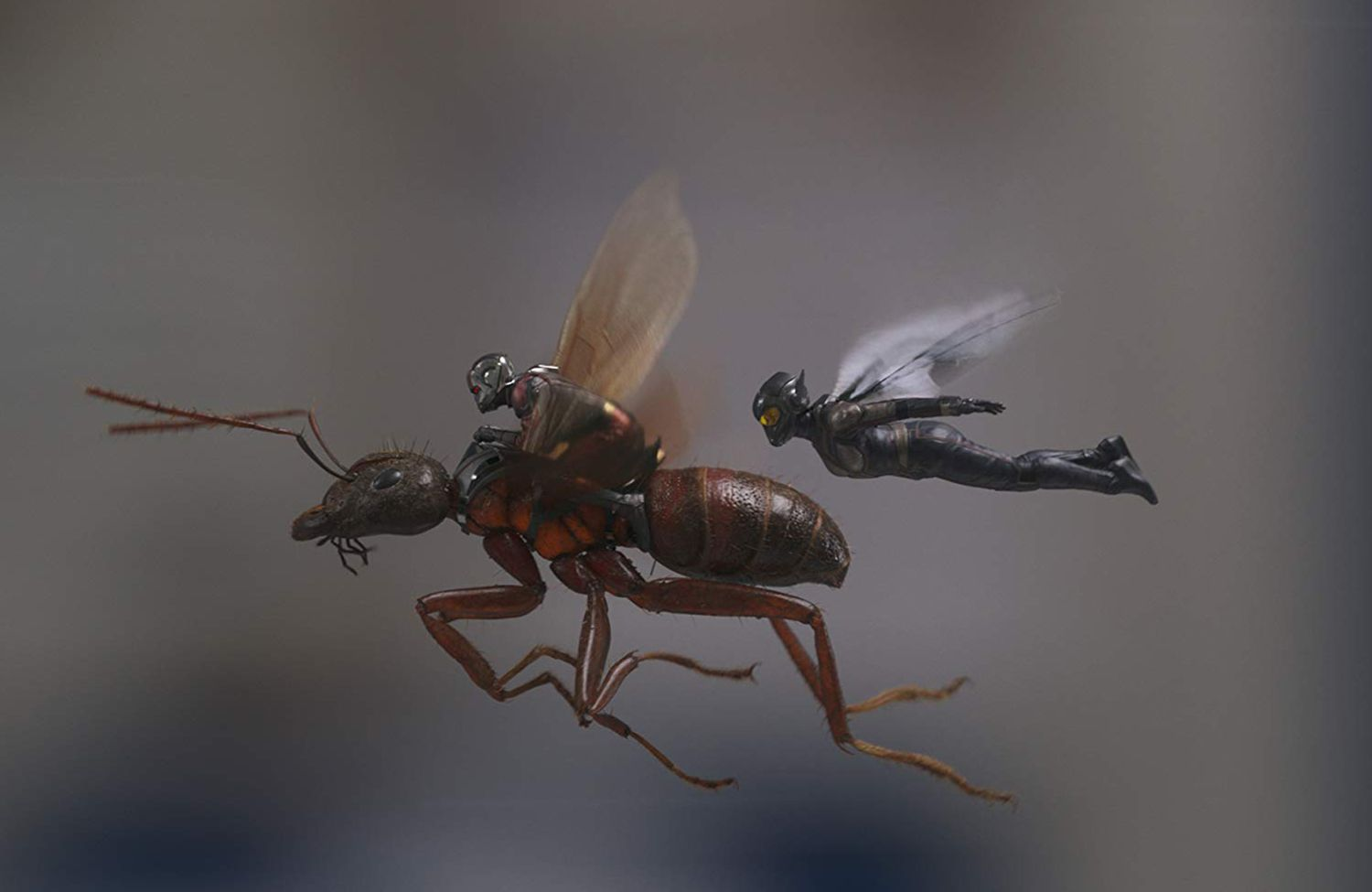 17 Ant-Man and the Wasp - Marvel Studios