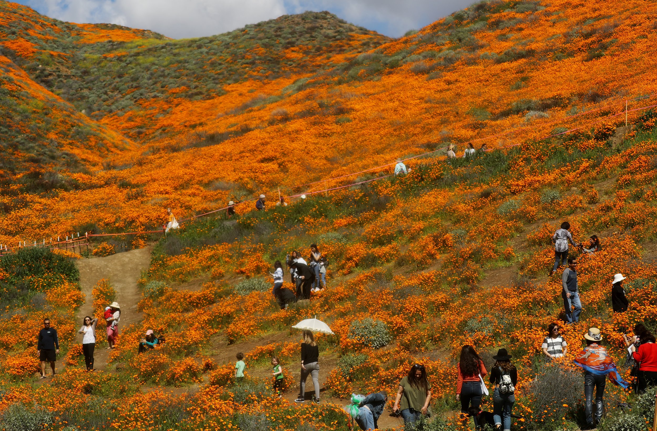 super bloom wild flowers california getty