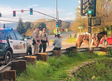 California horse DUI